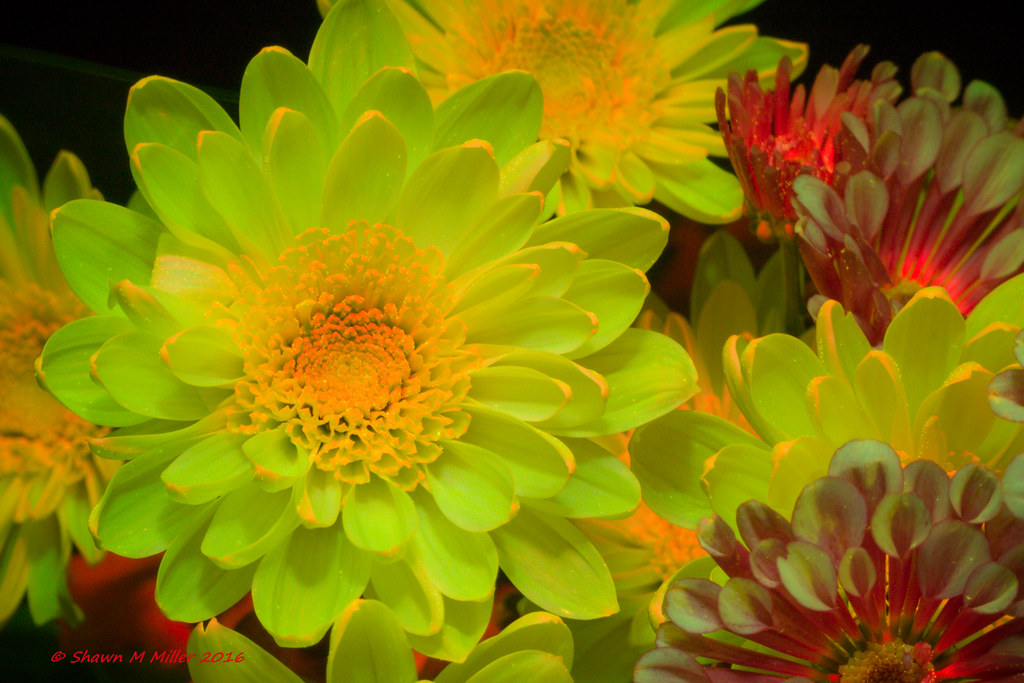 Nightsea- flowers under blue light
