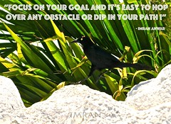 Focus On Your Goal And It's Easy To Hop Over Any Obstacle & Dip In Your Path - IMRAN™