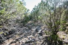 Moderate Trail