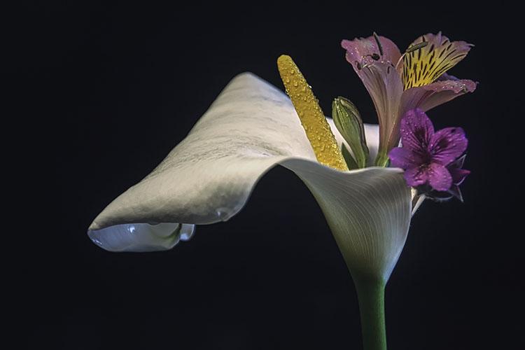 Vencedor do desafio mensal: Três flores, num fundo neutro