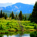 Small photo of Alberta Excursions and Curiosities