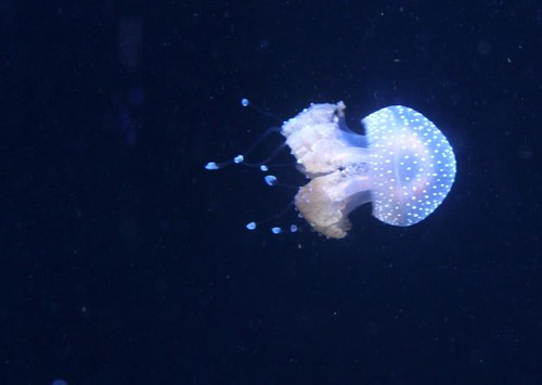 Baltimore Aquarium-11