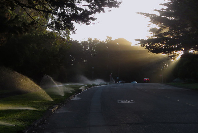 sprinklers and sun rays, morning.  Golden Gate Park, San Francisco (2013)