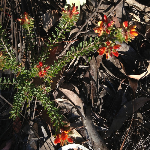 bush flowers 4
