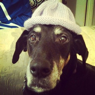 Whipping up a couple of quick #knit #babyhats for Quinn from the leftover blanket yarn... #knitstagram #dogstagram