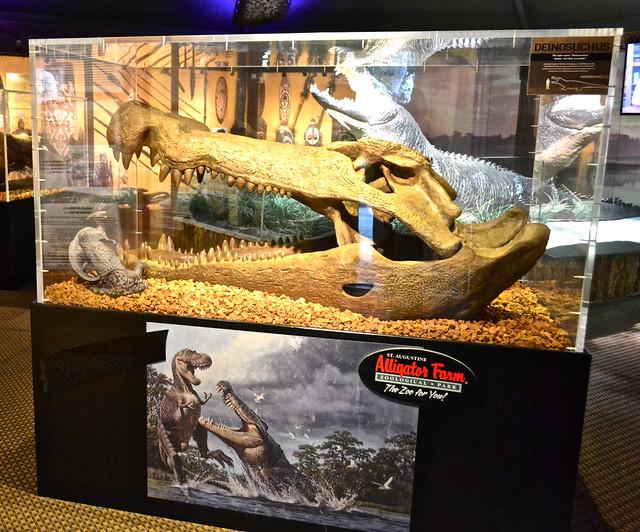 prehistoric crocodilian skull