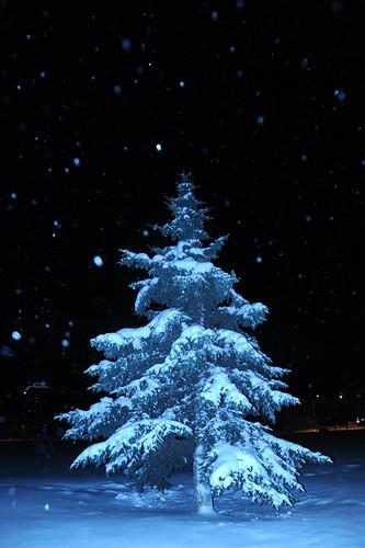 Natural Christmas tree and snowfall, Park Strip, downtown, Anchorage, Alaska, USA by Wonderlane