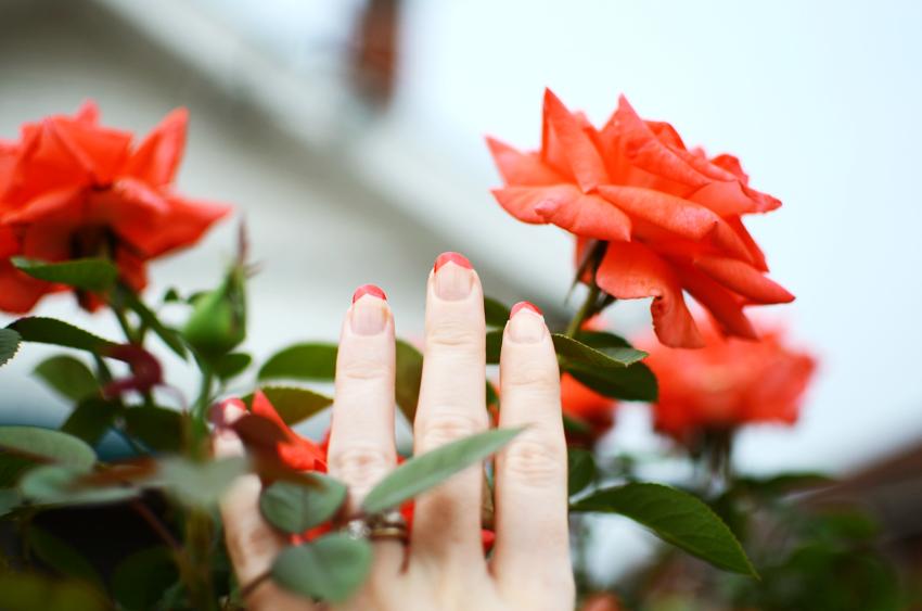 valentine pink h
