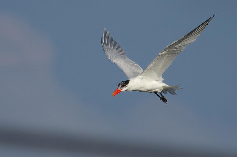 近期拍的鳥兒們