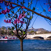 Fleurs mises en Seine