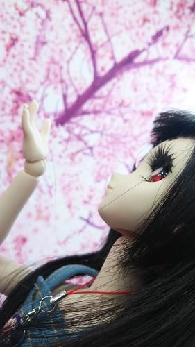 桜の壁紙の前で