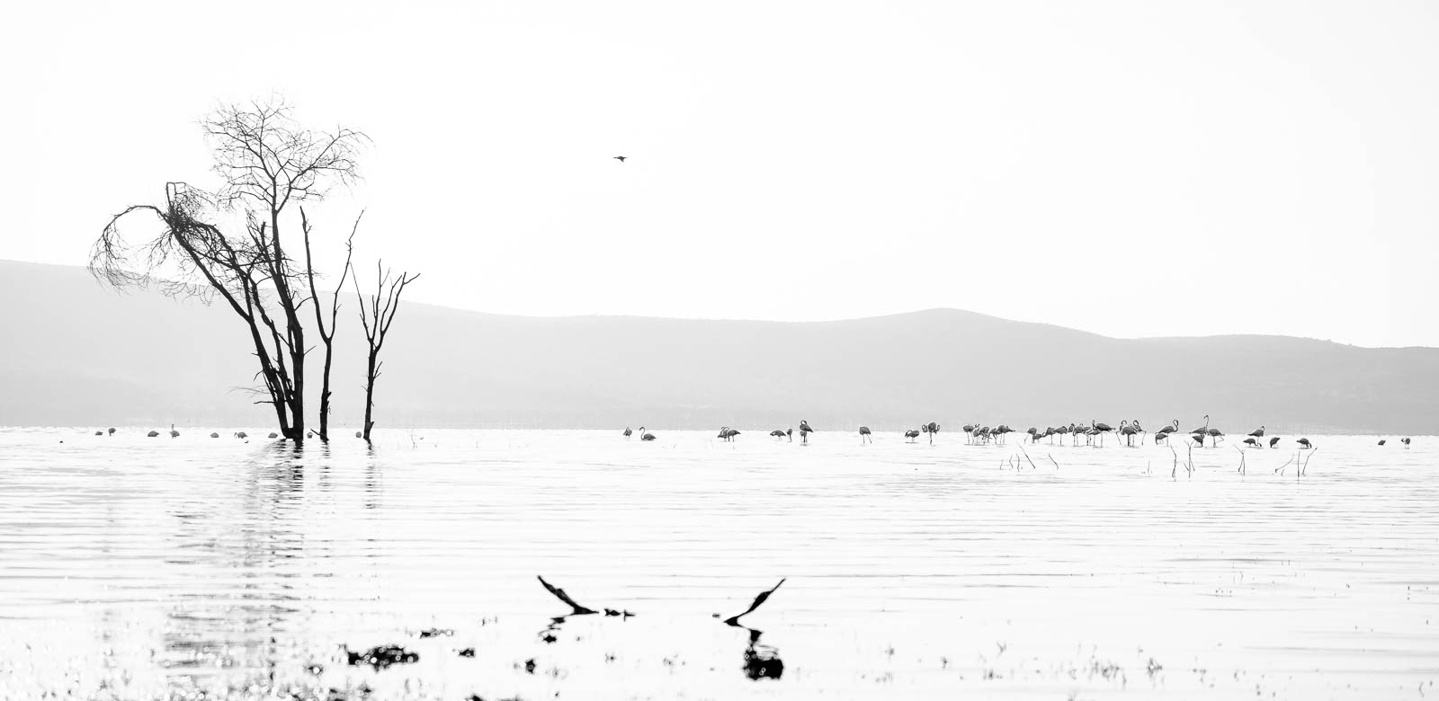 Morning at Lake Nakuru, Kenya