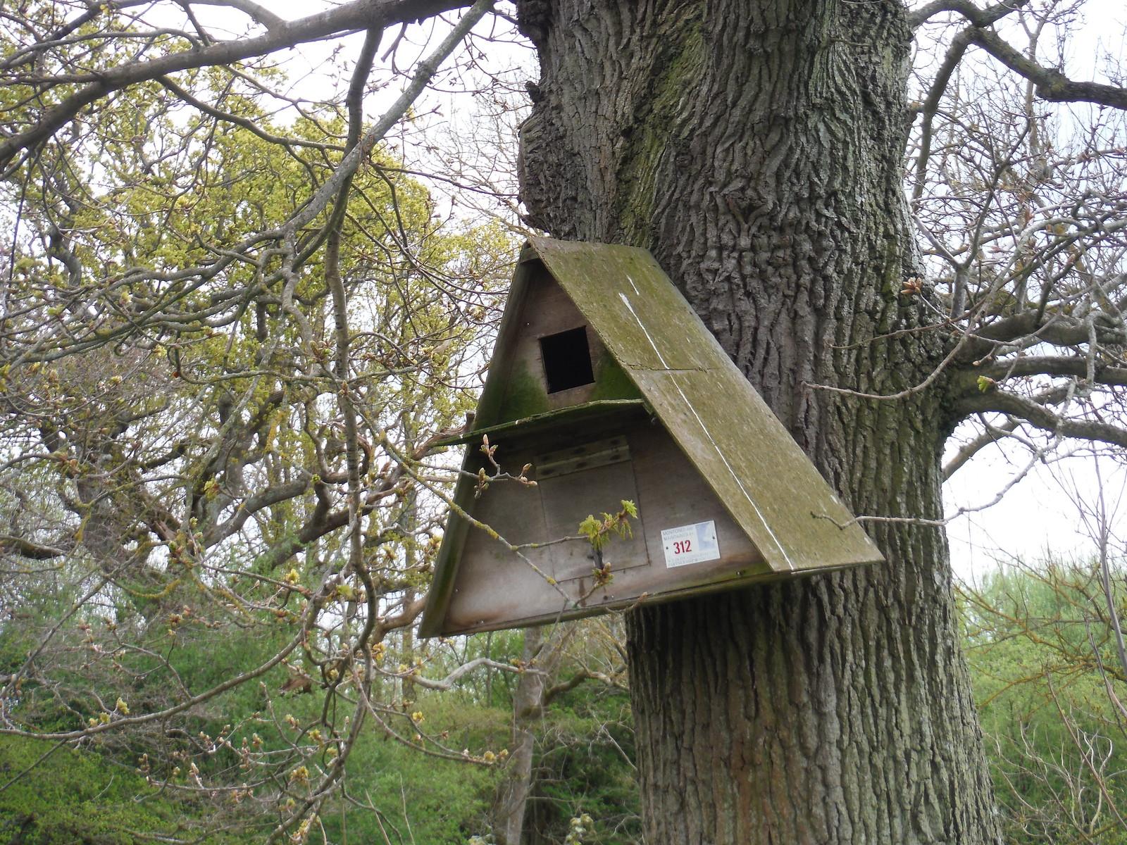 Barn Owl Nesting Box SWC Walk 272 Uckfield to Lewes