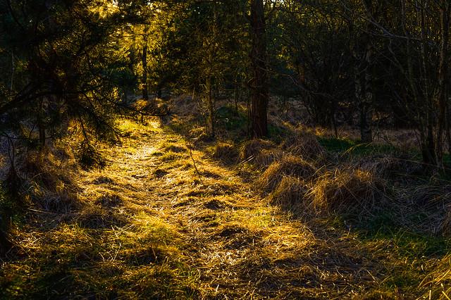 Yellow path, Nikon DF, AF-S Nikkor 50mm f/1.8G