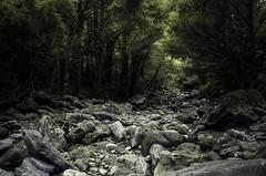 Darkness forest
