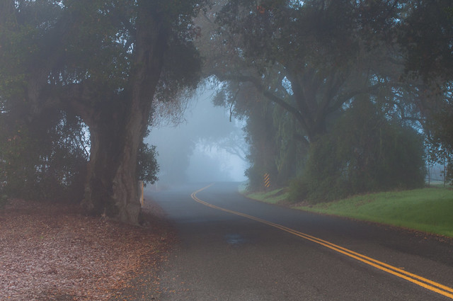 The Road Between Spring And Fall