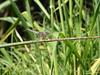 Dragonfly Respite