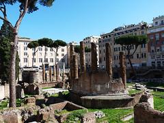 Řím – 10krát z Věčného města: Kočky na Largo di Torre Argentina (3. díl)