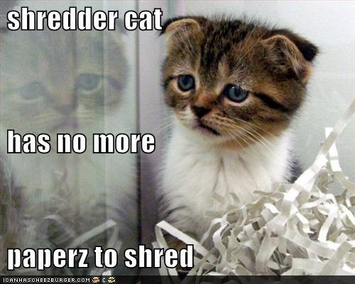 funny-pictures-cat-shreds-paper