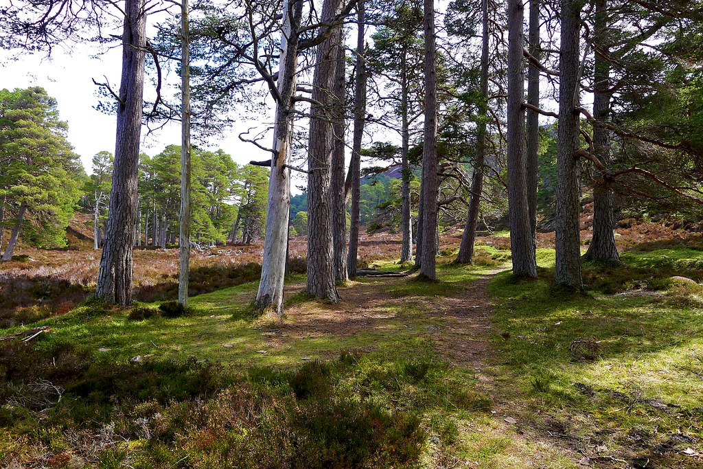 Woodland in Glen Quoich