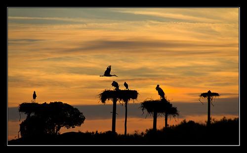 sunset sky españa naturaleza nature clouds spain cielo nubes ocaso storks nests extremadura caceres cigüeñas losbarruecos malpartida nidos canoneos7d tamron18270mm