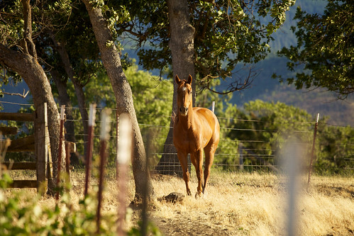 horse pony ashland southernoregon canonef70200mmf4l