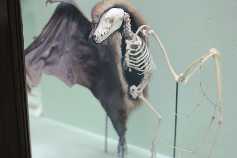 half bat