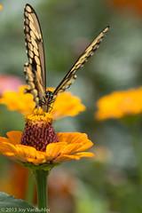 32/52-5: Butterfly