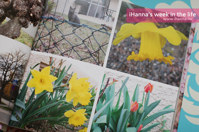 A Week in the Life | Spring Flowers April 2012