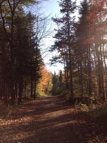 park autumn trees light fall moncton mapleton