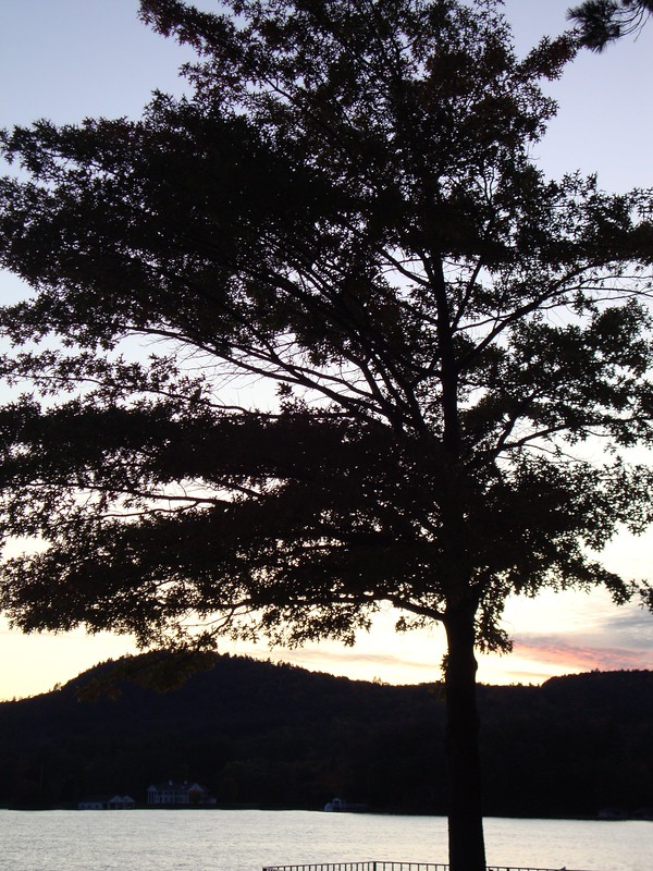 Lake George sunset behind tree