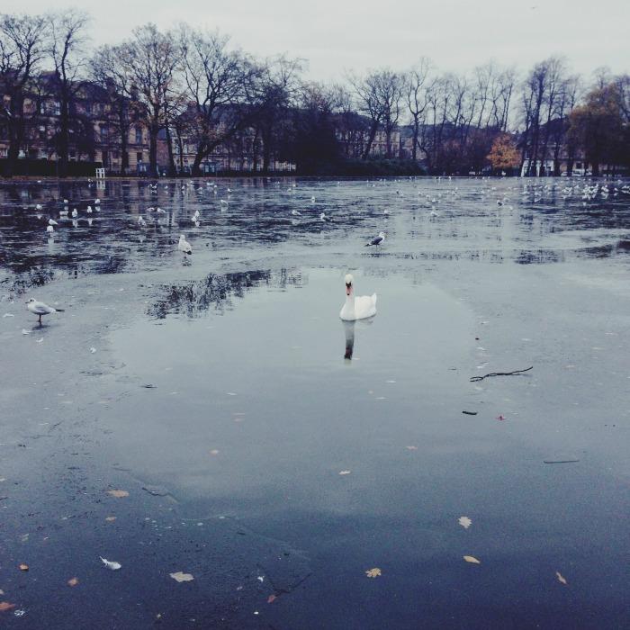 Queens Park Glasgow Swan
