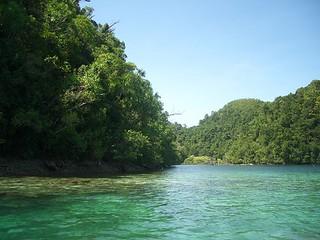 siargao-island-mangrove-forest
