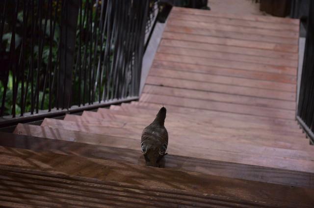 Biosphaere Potsdam mohawked bird