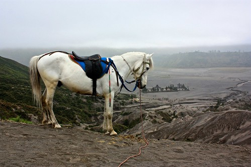 a white stallion looks on over the temple at the base of the new crater
