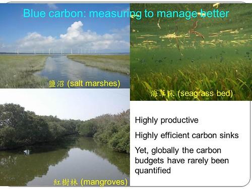 紅樹林、海草床、鹽沼,是最近較熱門的濕地碳吸存能力研究場域。林幸助提供。
