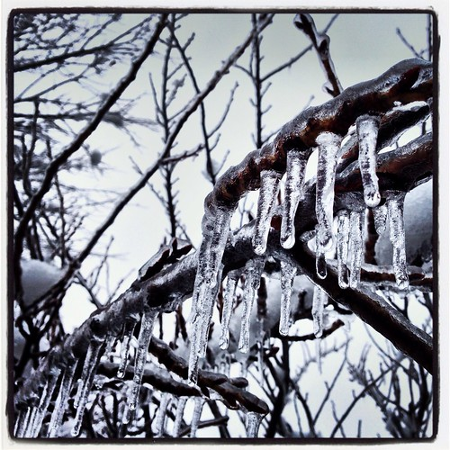 Icicles (36/365) by elawgrrl