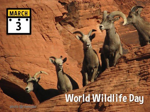 March 3 is World Wildlife Day #WorldWildlifeDay @WildlifeDay (attribution-sharealike license)