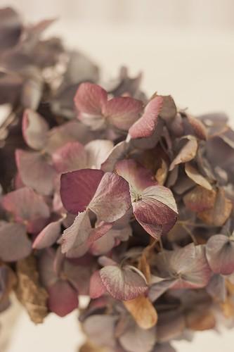 Dried Hydrangea Blossoms by Rustic Pixel