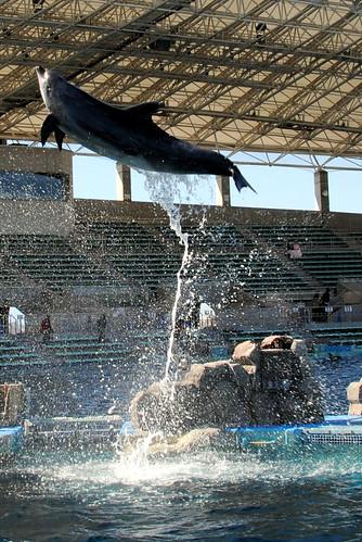 Nagoya Aquarium 095r