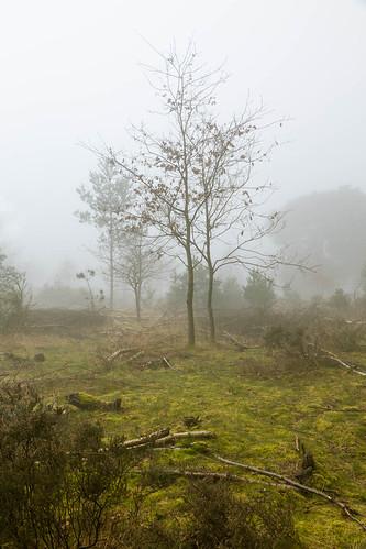 greatbritain chrisdale chrismdale cloud edwinstowe england fog forest haze landscape mist nottingham nottinghamshire notts photography sherwood sherwoodforest trees uk woods