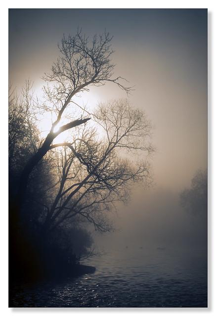 Dawning ducks