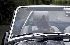 C13- Castro Driving Mog