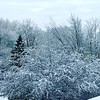 Silent. #morning #seasons #spring #minnesota