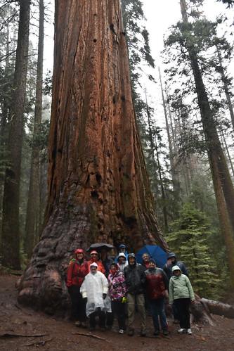 Grouped around a big tree in the Nelder Grove, California. Courtesy of Glenda Gilreath