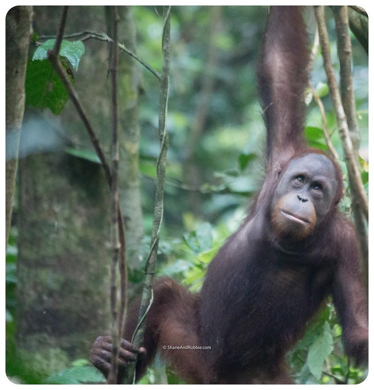 Borneo-20170413-IMG_7945