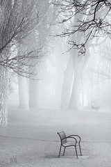 enveloped in Loneliness
