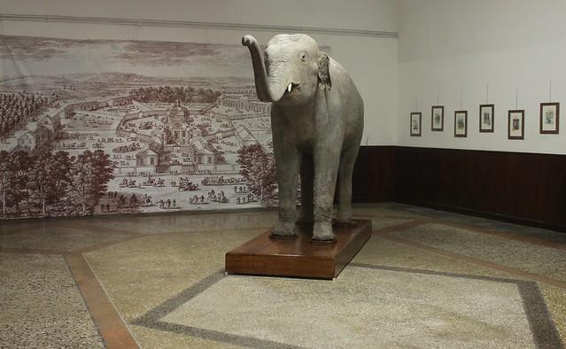 Un giorno da Elefante - 8 aprile 2017