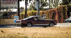 Mustang 2+2 at City Limits