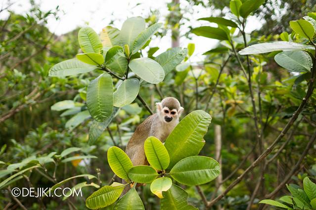 River Safari - Squirrel Monkey 3